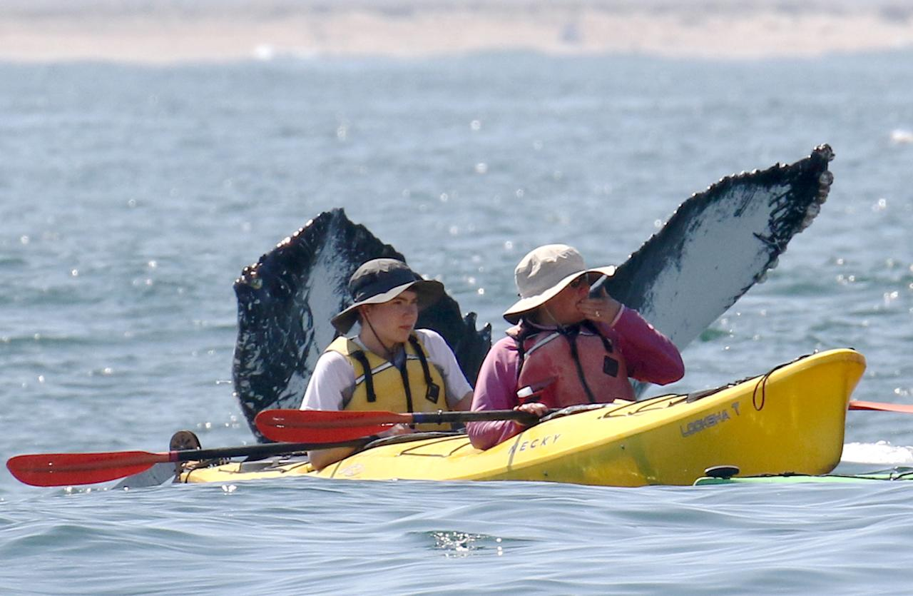 <p>Two oblivious tourists in a kayak miss the spectacular whales submerging behind them in Monterey Bay, Calif. (Photo: Jodi Frediani/Caters News) </p>