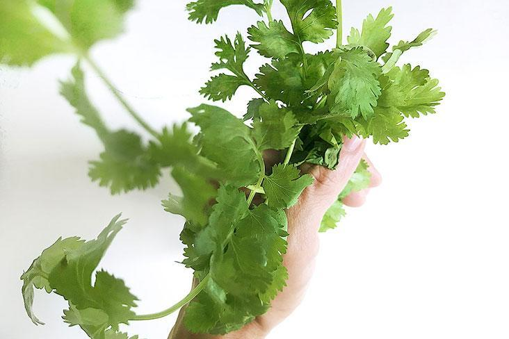 Worried about your fresh cilantro wilting? This recipe will come to your rescue.