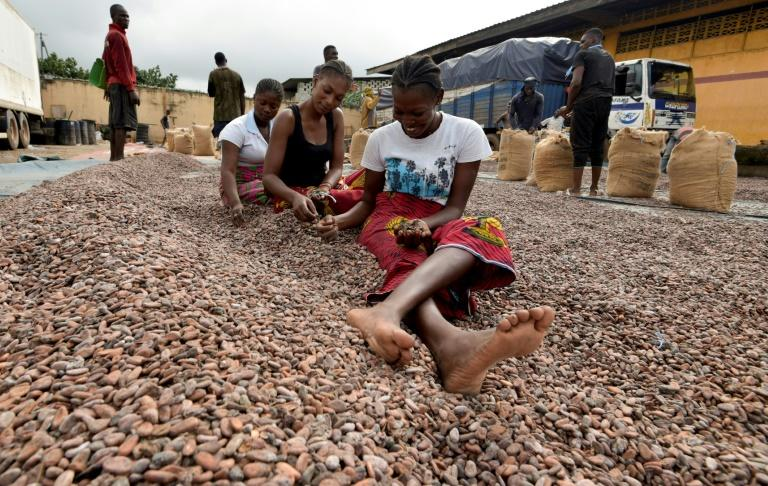 Time to trade: Women in Abidjan sort cocoa beans for export (AFP Photo/Sia KAMBOU)