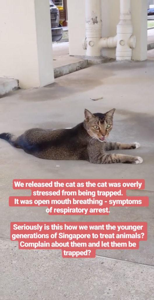 The now-released cat in Tampines.