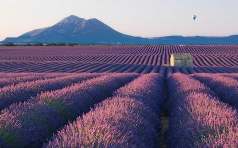 <span>During the summer, the fields of Provence erupt into a riot of vivid purple as the lavender nears harvest</span> <span>Credit: DAVID CLAPP </span>