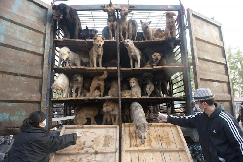 Image result for live animal transport yulin