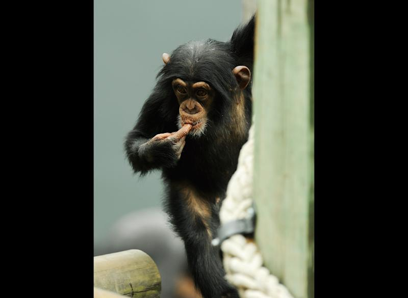 """""""I didn't believe the theory that human beings – thinking, loving beings – originated from fish that sprouted legs and crawled out of the sea. Or that human beings began as single-celled organisms that developed into monkeys who eventually swung down from the trees."""" --<em>Going Rogue</em>"""
