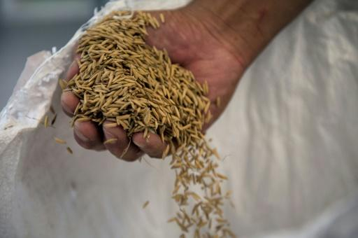 China Opens Doors to US Rice for the First Time