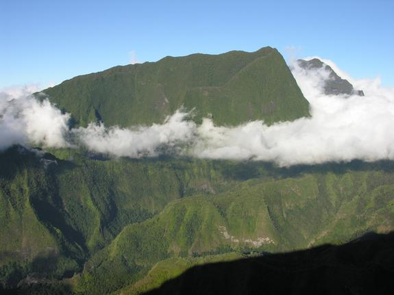 Tahiti Abounds in New Beetle Species
