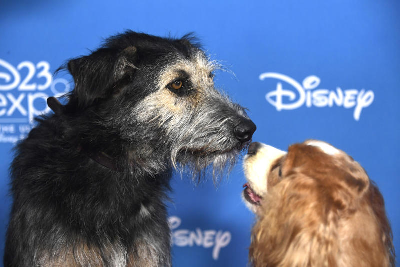 ANAHEIM, CALIFORNIA - AUGUST 23: Lady and the Tramp attend D23 Disney + event at Anaheim Convention Center on August 23, 2019 in Anaheim, California. (Photo by Frazer Harrison/Getty Images)