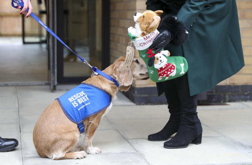 WINDSOR, ENGLAND - DECEMBER 09: Camilla, Duchess of Cornwall presents a Christmas stocking to Sandy as she visits the Battersea Dogs and Cats Home to open the new kennels and thank the centre's staff and supporters on December 9, 2020 in Windsor, United Kingdom. (Photo by Steve Parsons - WPA Pool/Getty Images)