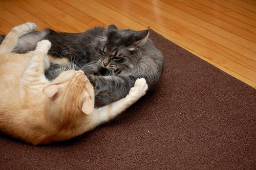 """<div class=""""caption-credit"""">Photo by: Photo credit: jonner 