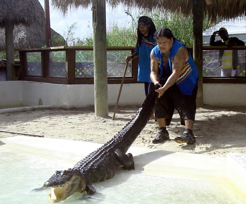 Rocky Jim, Jr., a 44-year-old Miccosukee Indian who has been wrestling alligators for 31 years, entertained countless tourists