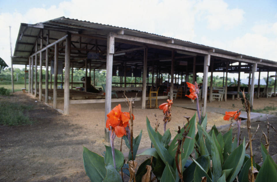 Flowers continue to grow outside the wooden, open-air main assembly pavilion at Jonestown, Guyana, where 913 Peoples Temple cult members perished in mass murder-suicides