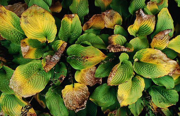 "<p>That gorgeous shade-loving hosta may look perfect by your front door, but it won't last long if that area gets full sun. Ditto for sun lovers in the shade; they won't bloom or thrive.</p><p><strong>Fix it:</strong> ""Right plant, right place"" is a popular saying among plant geeks. Read the plant label or description before purchasing a plant, and have an appropriate spot in mind. For the record, full sun means 6+hours of direct sunlight, part sun means about half that. Full shade means no direct sun. </p><p><a class=""link rapid-noclick-resp"" href=""https://go.redirectingat.com?id=74968X1596630&url=https%3A%2F%2Fwww.homedepot.com%2Fp%2FMartha-Stewart-Living-Medium-Nitrile-Coated-Palm-Breathable-All-Purpose-Non-Slip-Grip-Garden-Gloves-MTS-GLVNP1-M%2F311774966&sref=https%3A%2F%2Fwww.womenshealthmag.com%2Flife%2Fg33004348%2Fbiggest-gardening-mistakes%2F"" rel=""nofollow noopener"" target=""_blank"" data-ylk=""slk:SHOP GARDEN GLOVES"">SHOP GARDEN GLOVES</a></p>"