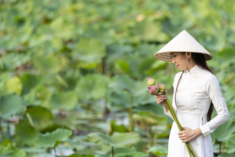 Vietnamese female on a wooden boat collecting lotus flowers. Asian women sitting on wooden boats to collect lotus. Beautiful girl wearing traditional Vietnamese dress hand holding pink flowers.