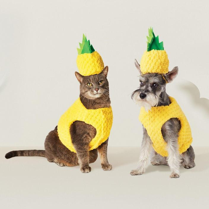 "<p>Pineapple costume today, trash bin contents on the floor tomorrow.</p> <br> <br> <strong>Target</strong> Pineapple Pet Costume, $12.99, available at <a href=""https://www.target.com/p/pineapple-dog-costume-hyde-and-eek-boutique-153/-/A-53655339"" rel=""nofollow noopener"" target=""_blank"" data-ylk=""slk:Target"" class=""link rapid-noclick-resp"">Target</a>"