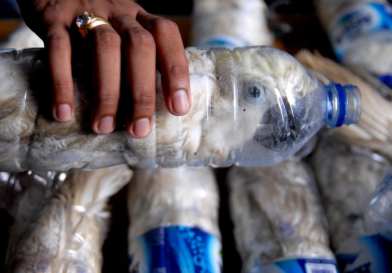 <p>A policeman holds a water bottle with a yellow-crested cockatoo put inside for illegal trade, at the customs office of Tanjung Perak port in Surabaya, East Java province, Indonesia, May 4, 2015 in this picture taken by Antara Foto. Police arrested one man traveling by ship from Makassar, Sulawesi with 22 of the endangered cockatoos held inside water bottles. (Photo: Antara Foto/Risyal Hidayat/Reuters) </p>