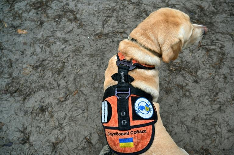 "Deep Purple, wearing a dog collar insignia ""Service Dog"" and ""Hero's Friend,"" gets taken for a walk by his handler Oleksandr, a 38-year-old war veteran, who spent a year on the frontline and credits the animal with saving his life"