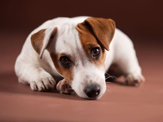 With little known about the animal's history and few ways to contact the breeder, buying an animal from an online classified site comes with risks, says one veterinary consultant. (Shutterstock - image credit)
