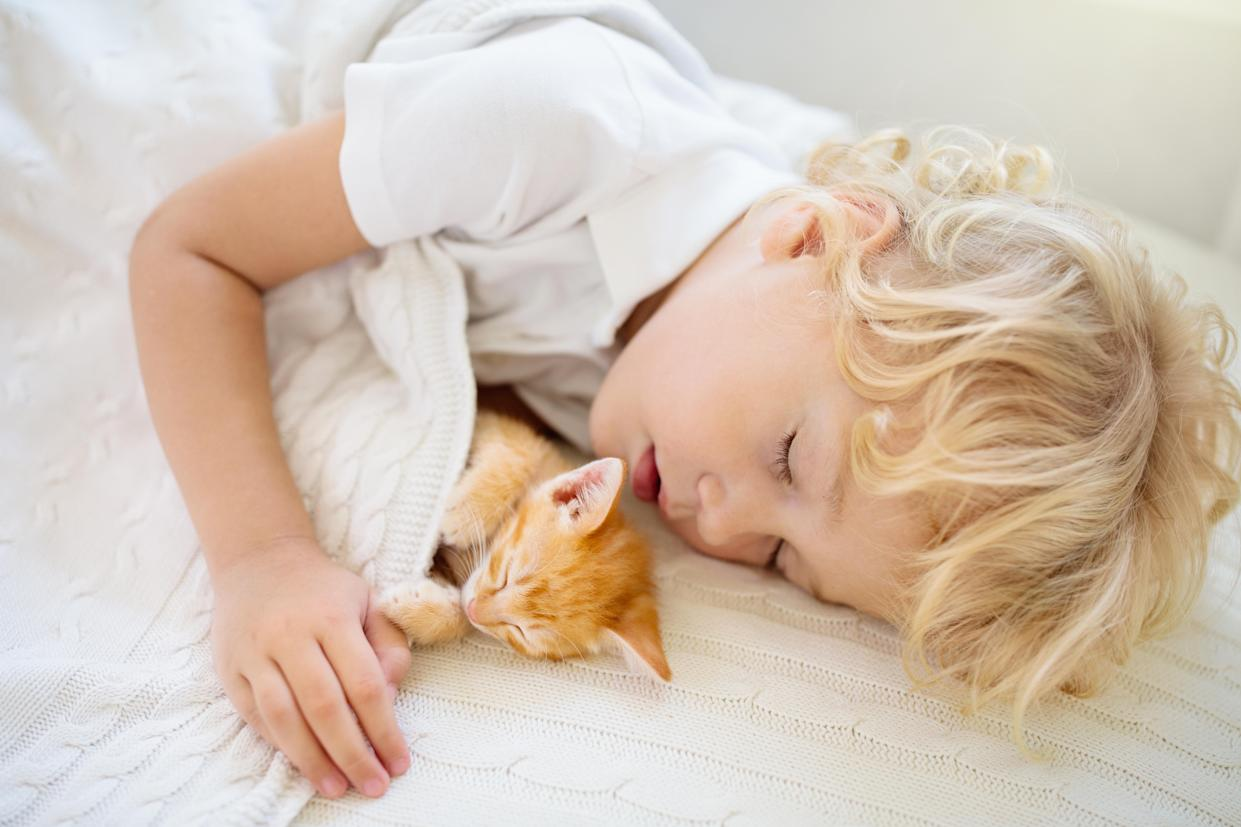Baby boy sleeping with kitten on white knitted blanket. Child and cat. Kids and pets. Little kid with his animal. Cozy winter evening with pet. Children play with animals. Toddler and kitty sleep.