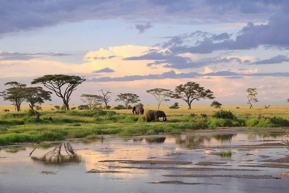 "<p>Known for its huge annual migration of wildebeest and zebras, this national park is home to wildlife that roam across <a href=""https://www.tripadvisor.com/Tourism-g293751-Serengeti_National_Park-Vacations.html"" rel=""nofollow noopener"" target=""_blank"" data-ylk=""slk:5,700 square miles of grassy plains"" class=""link rapid-noclick-resp"">5,700 square miles of grassy plains</a>. </p>"