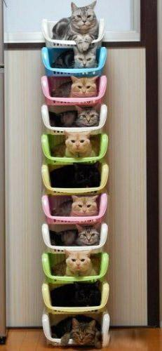 cats resting in stacked vertical crates
