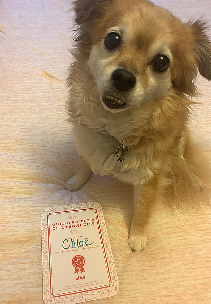 """I'd like to thank my human mom for her support and loyalty..."" (Photo: Izabella Zaydenberg)"