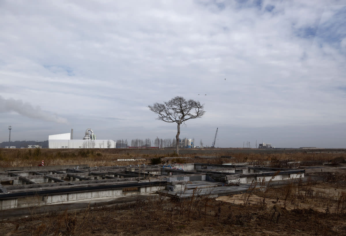 A tree stands in an evacuation zone area damaged by the 2011 earthquake and tsunami in Namie, Fukushima Prefecture, Japan, on Saturday, Feb. 13, 2016. Five years since the meltdown at the Fukushima Dai-Ichi nuclear power plant, progress has been made to rebuild much of the prefecture. Yet within evacuation zones designated by the Japanese government, scars are still obvious and many evacuees who fled are unwilling to return. Photographer: Tomohiro Ohsumi/Bloomberg