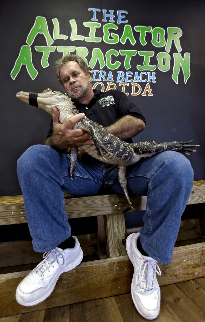 Bob Barrett, owner of The Alligator Attraction poses with one of his alligators Wednesday, Sept. 26, 2012 in Madeira Beach, Fla.  Instead of bounce houses and ponies, some Florida parents are opting for more exciting activities at their kid's birthday parties: alligators.  Barrett says the parties are totally safe, because the alligators mouths are taped shut. (AP Photo/Chris O'Meara)