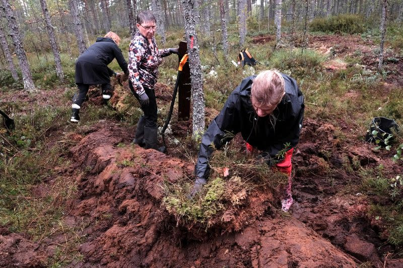 Bring back the bogs: Estonian volunteers get hands dirty in climate fight