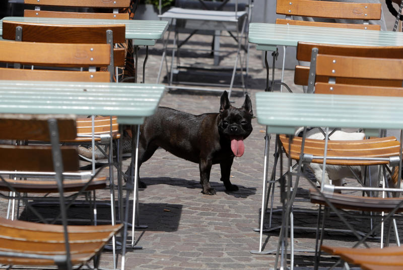 A dog sticks his tongue out Monday, June 24, 2019 in Lille, northern France. Authorities in the Paris region have issued an alert for intense heat expected in the French capital and across Europe this week. Meteorologists say the heat wave is caused by hot winds coming from the Sahara desert. (AP Photo/Michel Spingler)