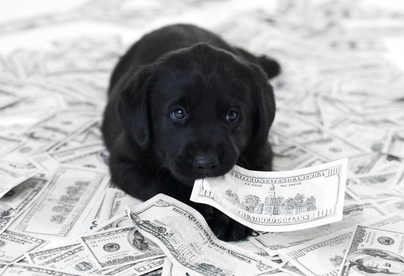 Black dog sitting on a pile of money.