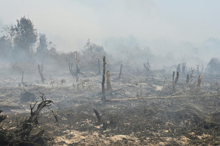 This year's fires have been worsened by dry weather
