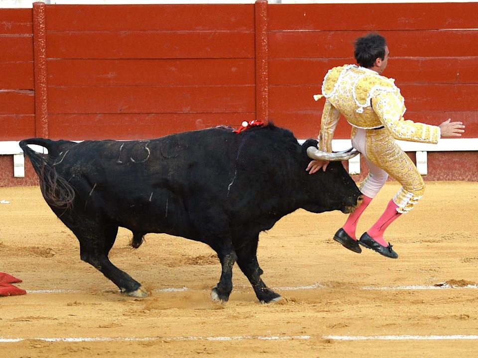 Spanish matador Enrique Ponce is attacked by the bull after stabbing the sword to kill it during a bullfight at El Puerto de Santa Maria's bullring, on 6 August 2020: AFP/Getty