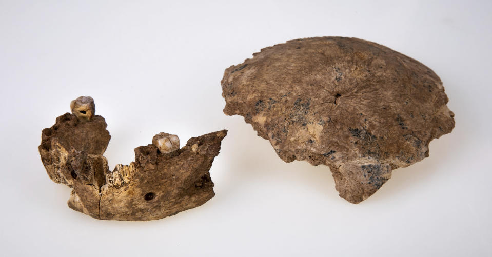 This undated photo provided by Tel Aviv University in June 2021 shows a human ancestor mandible and skull discovered in Neher Ramla, Israel. On Thursday, June 24, 2021, scientists reported that the bones found in a quarry are from a branch of the human evolutionary tree and are 120,000 to 140,000 years old. (Avi Levin and Ilan Theiler, Sackler Faculty of Medicine, Tel Aviv University via AP)