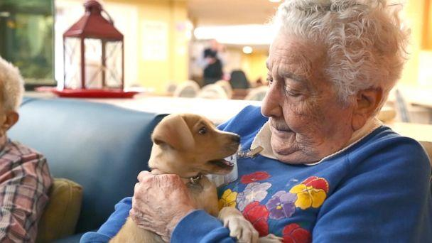 PHOTO: Adoptable puppies from North Shore Animal League America visit seniors at the Oyster Bay Senior Campus to raise the spirits of residents living with dementia and Alzheimer's. (ABC News)