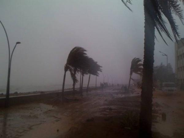 Coconut palms bend and sway in the powerful winds accompanying Cyclone Thane on December 30 in Puducherry. Photo by Yahoo! reader Aravindan