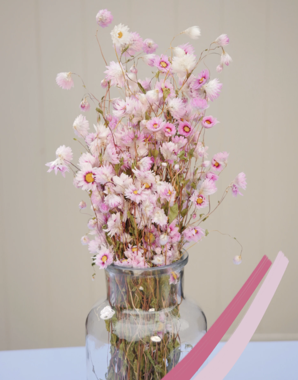 Dried Pink Rodanthe (The Happy Blossoms)