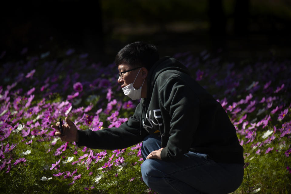 A man wearing a face mask to protect against the coronavirus takes a photo of blooming flowers at a public park in Beijing, Saturday, Oct. 24, 2020. With the outbreak of COVID-19 largely under control within China's borders, the routines of normal daily life have begun to return for its citizens. (AP Photo/Mark Schiefelbein)