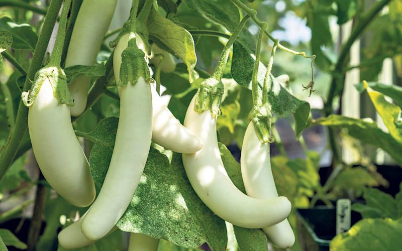 Getting ready for autumn's arrival: use up aubergines and squash in stews and starters - Alamy