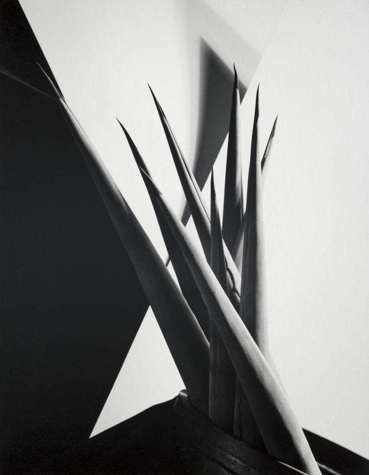 <p>Agave Design I, 1920s. (Photo: The Cleveland Museum of Art, the A. W. Ellenberger Sr. Endowment Fund, 1985.47. © The Imogen Cunningham Trust) </p>