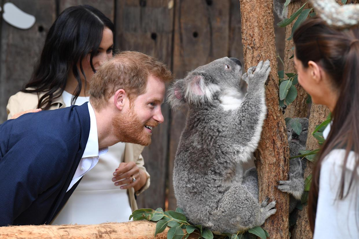 The two animals were actually their namesake koalas, Harry and Meghan. Photo: AAP