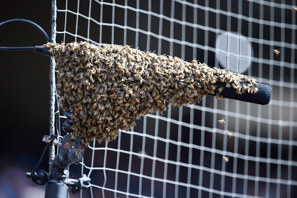 A swarm of bees sent the Padres game against the Marlins into a delay on Sunday afternoon.