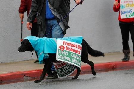 A teacher gets help from his dog as the Los Angels public school teachers continue to their strike as it enters its third day in Gardena, California, U.S., January 16, 2019. REUTERS/Mike Blake