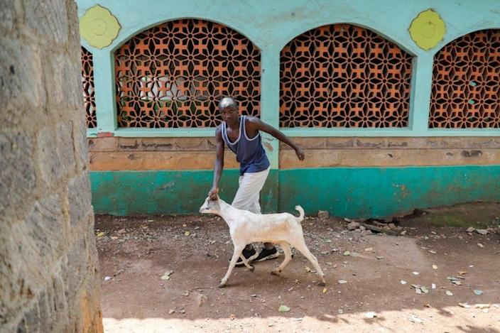 A man leads a goat to be slaughtered during Eid al-Adha in Nairobi, Kenya on July 20.
