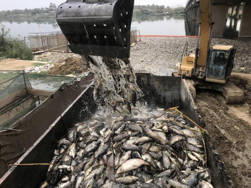 FILE - In this Saturday, Nov. 3, 2018 file photo, government employees collect dead carp from the Euphrates River near the town of Hindiyah, 80 kilometers (50 miles) south of Baghdad, Iraq. The World Health Organizations said Tuesday, Nov. 20, 2018 that laboratory tests completed after a shocking fish die-off in Iraq's Euphrates River show the water is contaminated with high levels of bacteria, heavy metals, and ammonia. (AP Photo/Ali Abdul Hassan, File)