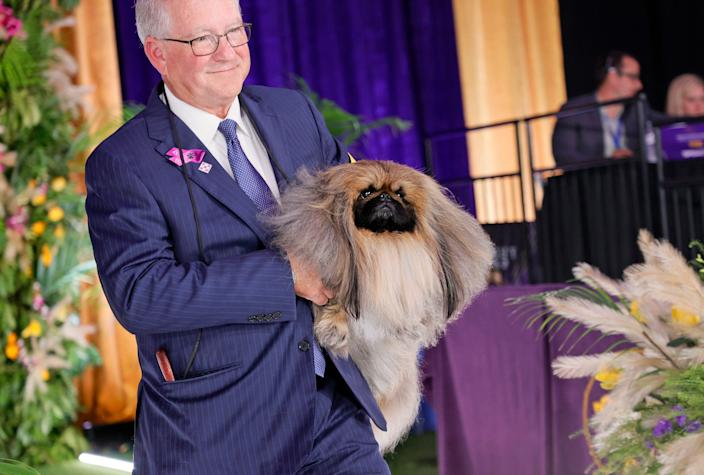 Wasabi the Pekingese wins Best in Show at the 145th Annual Westminster Kennel Club Dog Show.