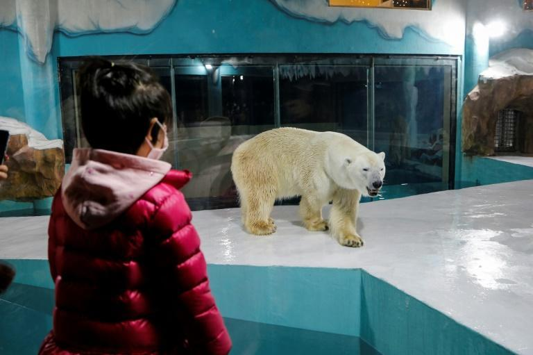 """""""Harbin Polar Land"""", a Chinese hotel in the country's northeast, has drawn condemnation from conservationists over its polar bear enclosure"""