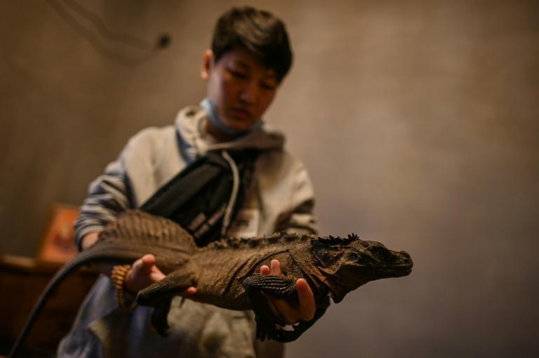 A customer holds an iguana at a reptile coffee shop in Shanghai
