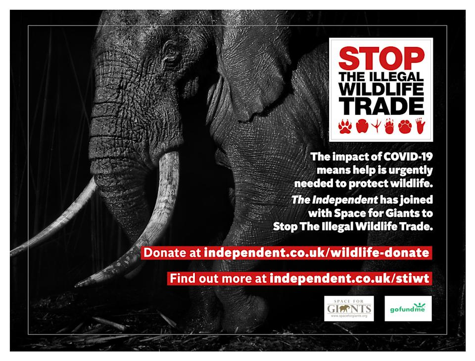 <p>We are working with conservation charity Space for Giants to protect wildlife at risk from poachers due to the conservation funding crisis caused by Covid-19. Help is desperately needed to support wildlife rangers, local communities and law enforcement personnel to prevent wildlife crime. Donate<a href=