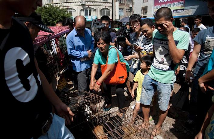 Animal-loving Yang Xiaoyun (C) pays about 7,000 yuan (US$1,100) to save around 100 dogs in Yulin in southern China's Guangxi province on June 20, 2015 (AFP Photo/)