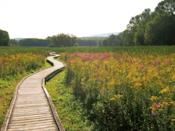 """<p>Hike along a piece of the Appalachian Trail on the <a href=""""https://www.tripadvisor.com/Attraction_Review-g46468-d10076268-Reviews-Appalachian_Trail_Pochuck_Boardwalk-Glenwood_New_Jersey.html"""" rel=""""nofollow noopener"""" target=""""_blank"""" data-ylk=""""slk:Pochuck Boardwalk"""" class=""""link rapid-noclick-resp"""">Pochuck Boardwalk</a>, found in Glenwood, New Jersey. This slice of the trail is certainly kinder to those who don't wish to tackle the trail in its entirety, offering wood-plank paths that travel through wooded areas and pastures.</p><p><br><a class=""""link rapid-noclick-resp"""" href=""""https://go.redirectingat.com?id=74968X1596630&url=https%3A%2F%2Fwww.tripadvisor.com%2FAttraction_Review-g46468-d10076268-Reviews-Appalachian_Trail_Pochuck_Boardwalk-Glenwood_New_Jersey.html&sref=https%3A%2F%2Fwww.countryliving.com%2Flife%2Ftravel%2Fg24487731%2Fbest-hikes-in-the-us%2F"""" rel=""""nofollow noopener"""" target=""""_blank"""" data-ylk=""""slk:PLAN YOUR HIKE"""">PLAN YOUR HIKE</a></p>"""
