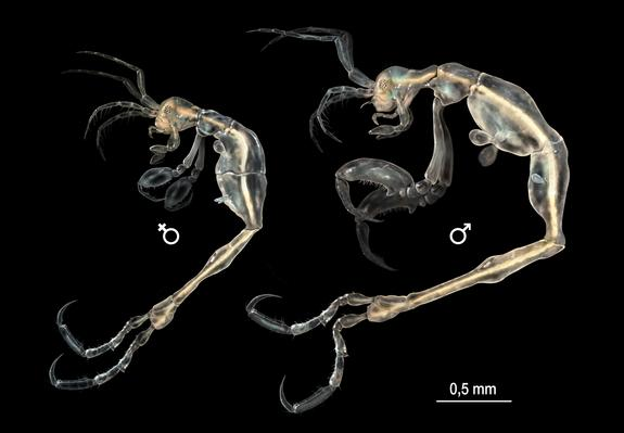 New Cave-Dwelling 'Shrimp' Discovered in California